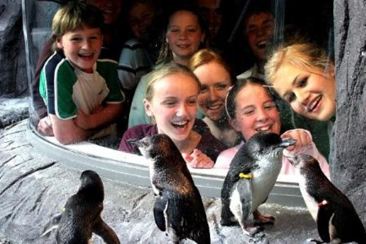 Akaroa Shore Excursion: Banks Peninsula, Christchurch City Tour and the International Antarctic Centre, Akaroa, NUEVA ZELANDIA