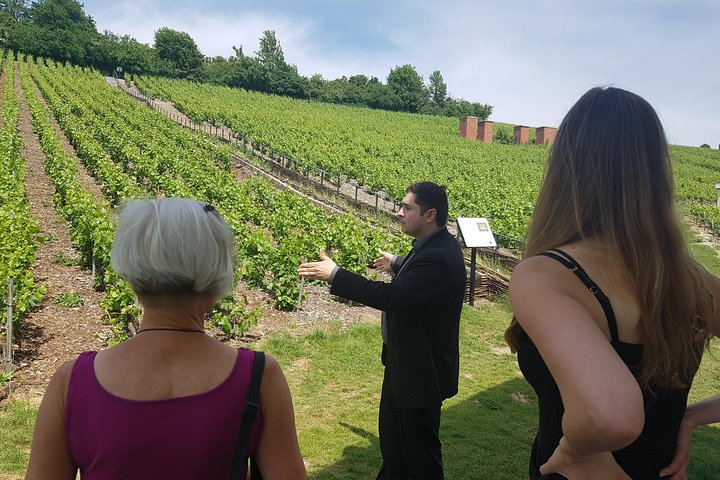 Taste champagne with a winemaker and visit his cellar., Reims, FRANCIA