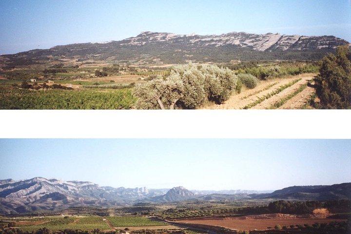 Visit winery and wine tasting, Tarragona, ESPAÑA