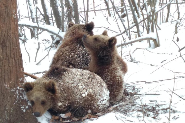 Private Tour from Brasov to the Bears Sanctuary, Rasnov Fortress and Bran Castle, Brasov, RUMANIA