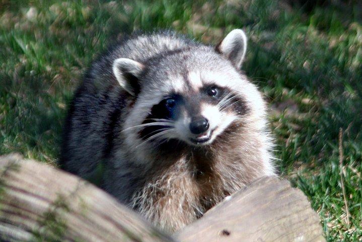 Skip the Line: Kamloops BC Wildlife Park Admission Ticket, Kamloops, CANADÁ
