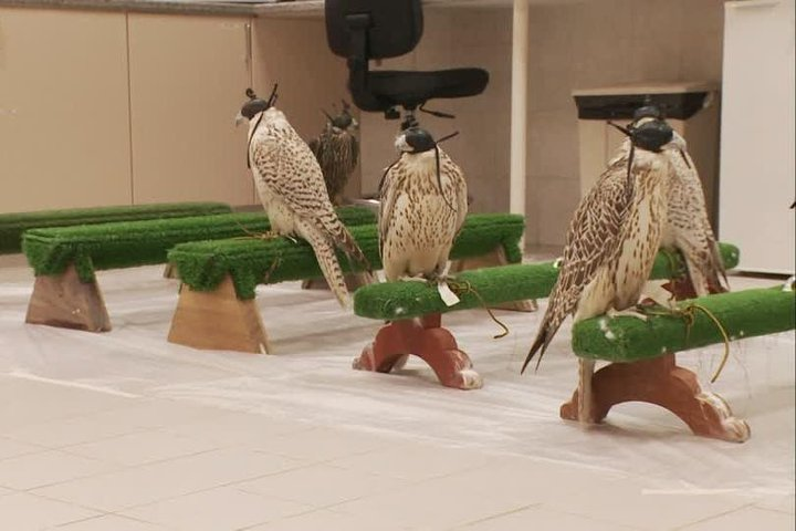 Abu Dhabi Falcon Hospital Tour Educational Tour About the Falcons With Transfers, Abu Dabi, EMIRATOS ARABES UNIDOS
