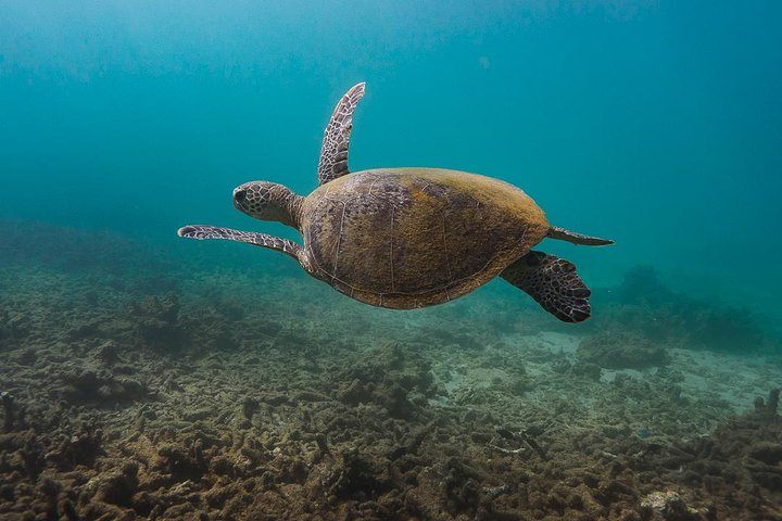 Ningaloo Reef or Muiron Islands Snorkeling and Wildlife Adventure, Exmouth, AUSTRALIA