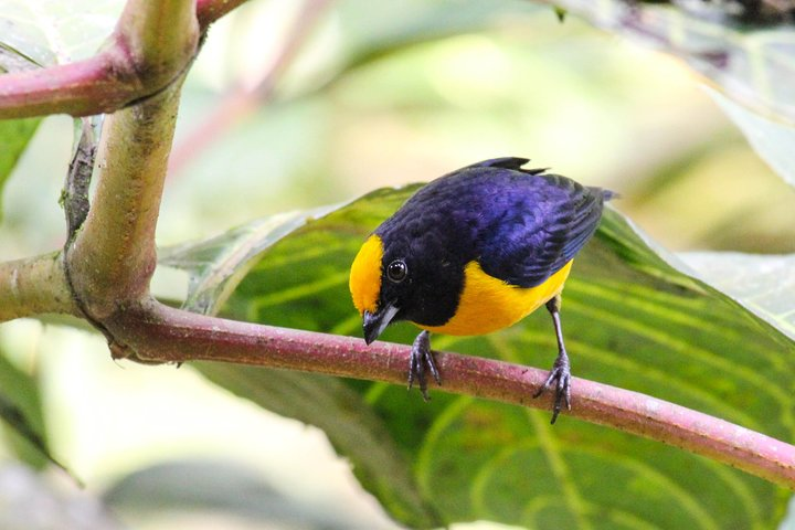 Birdwatching Tour in Tamarindo Tropical Forest area from Cuenca, Cuenca, ECUADOR