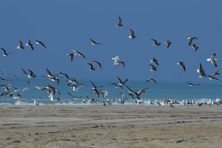 Half Day East Salalah Tour in Dhofar Mountains and Beaches By Beautiful Salalah, Salalah, OMAN