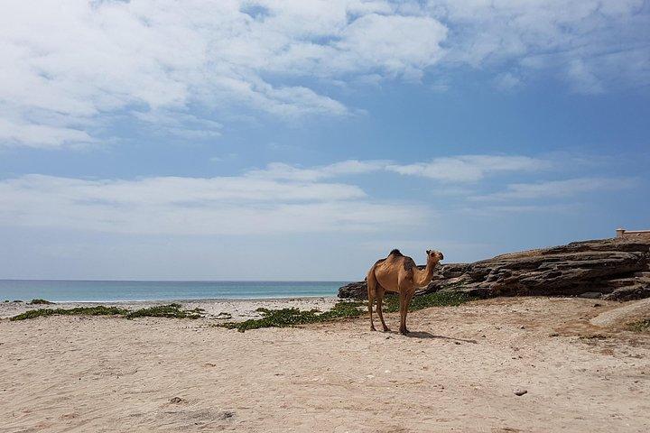 West Salalah Beach Excursion (Swim at Fazayah Beach) Half Day Private Tour, Salalah, OMAN