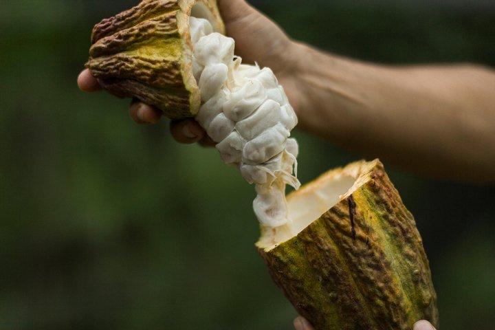 Día completo: Ruta del chocolate, bosques y manglares (salida desde Guayaquil), Guayaquil, ECUADOR
