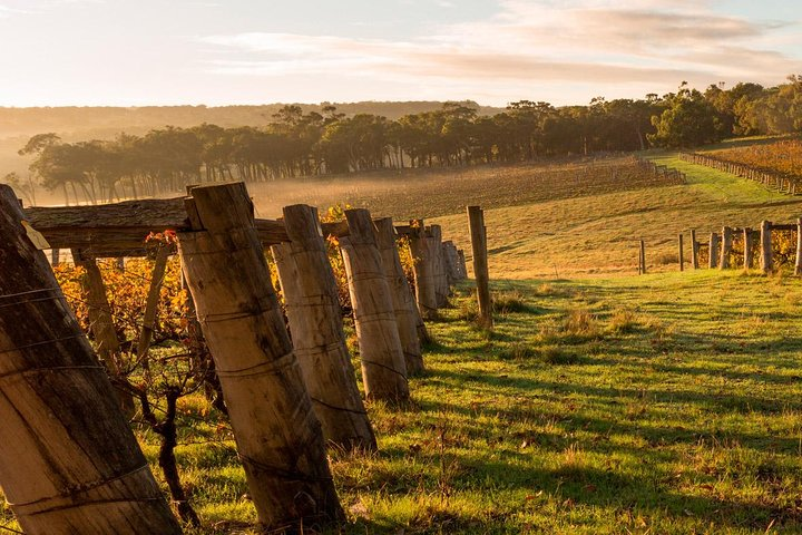 5 Hours Wineries, Coffee Tasting, Forest & Lunch at the Berry Farm, Margaret River, AUSTRALIA