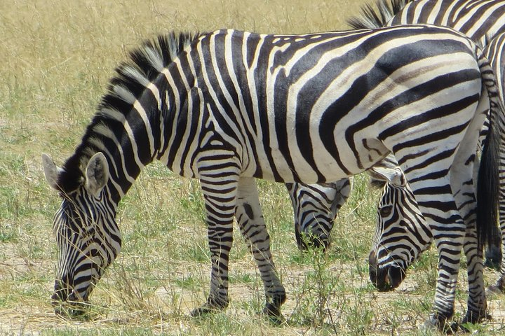 Hwange National Park & Victoria Falls 5 days Combo, Cataratas Victoria, Zimbabwe