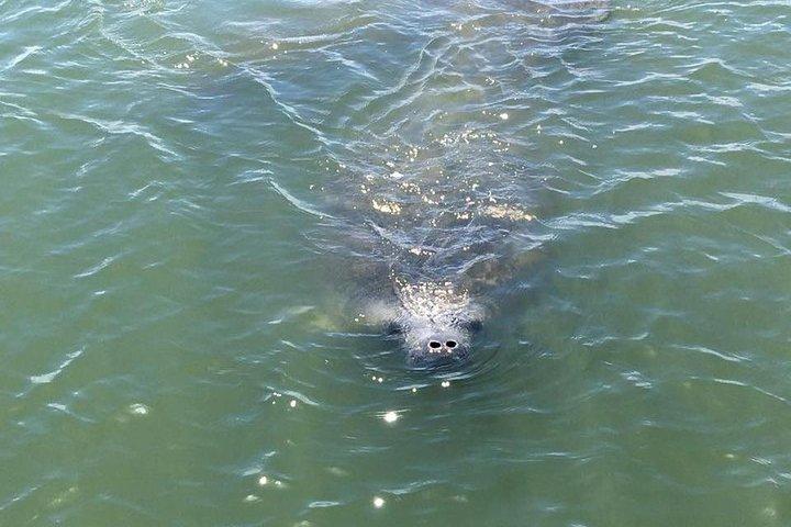 Wildlife Tour of Indian River Lagoon with Experienced Captain, Daytona Beach, FL, ESTADOS UNIDOS