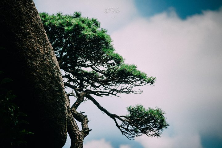2-Day Private Trip to Huangshan Mountain and Tongmo Ancient Town from Shanghai, Shanghai, CHINA