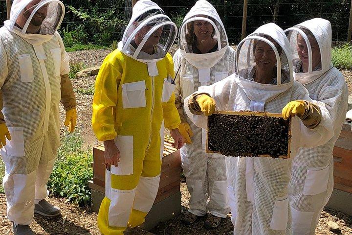 Killer Bees Farm & Honey Culinary Experience, Greenville, SC, ESTADOS UNIDOS