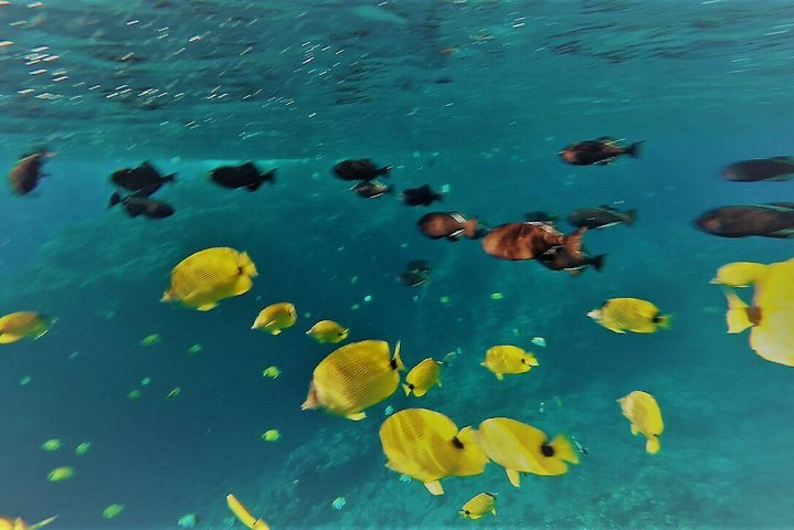 Molokini Crater Zodiak Adventure Snorkel Turtle Cove Swim Maui Hi Estados Unidos