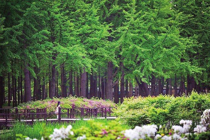 ❃(Free meal !) Nami Island & Petite France & Garden of Morning Calm One-Day Tour, Seul, COREA DEL SUR