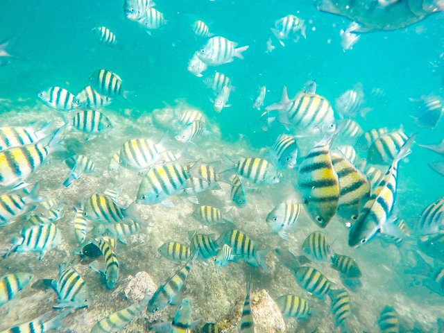 #1 Rated last 7 yrs-Small Adults only Lux Coral Nursery Snorkeling-Lobster Fest, Punta de Cana, REPUBLICA DOMINICANA