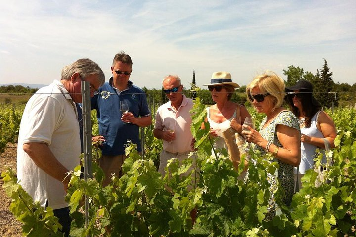 Half day wine tour. Private tour from Carcassonne and around., Carcasona, FRANCIA