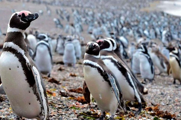 Punta Tombo Tour - Walk with the penguins, Puerto Madryn, ARGENTINA
