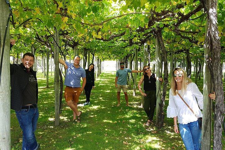 Half-Day Marlborough Wine Region Tour from Picton or Blenheim, Picton, New Zealand
