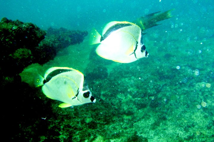 Private. Snorkeling Experience from Huatulco HT, Huatulco, Mexico