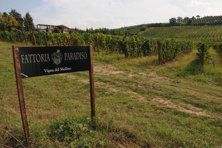 Wine tasting and Tour at the Sangiovese Winery, Pesaro, ITALIA