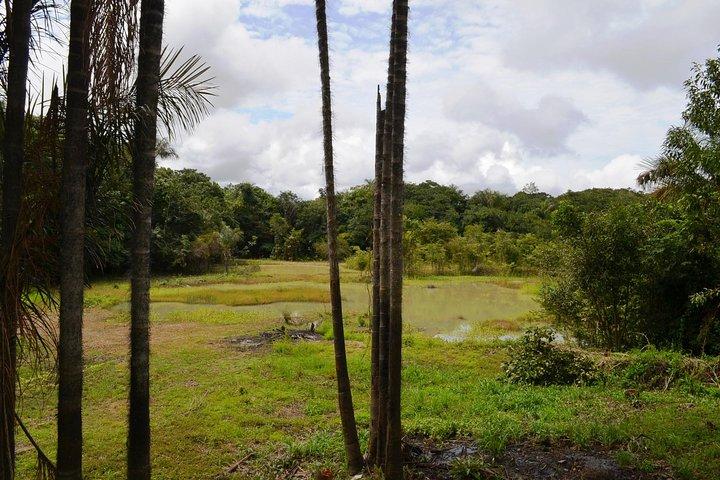 Buenos días Amazonas: 1 noche en la selva, Manaus, BRASIL