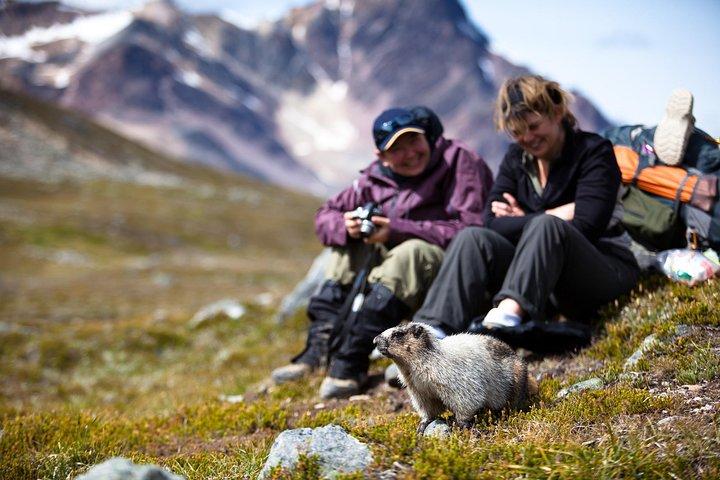 Discover Jasper and its Wildlife, Jasper, CANADA