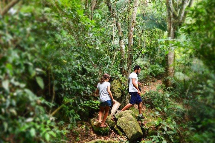 Coleta na Floresta - Caminhada gastronômica selvagem, Paraty, BRASIL