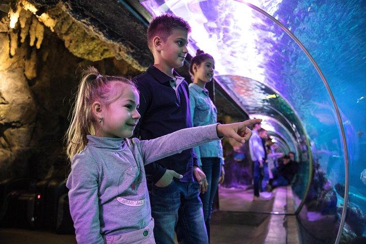 Evite as filas: ingresso de entrada para o SEA LIFE Speyer, Heidelberg, Alemanha
