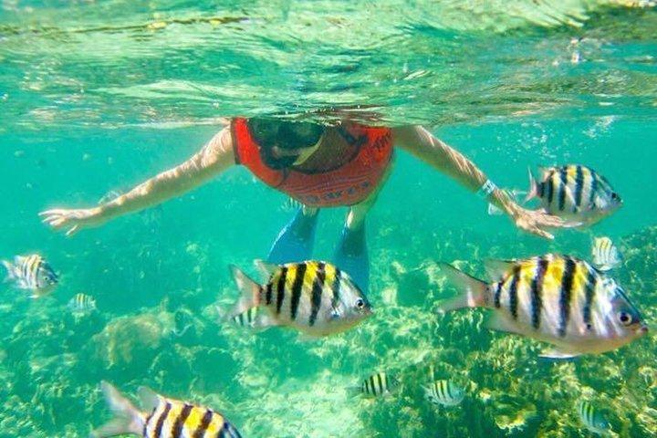 Half Day Catamaran & Snorkeling, Punta de Cana, REPUBLICA DOMINICANA