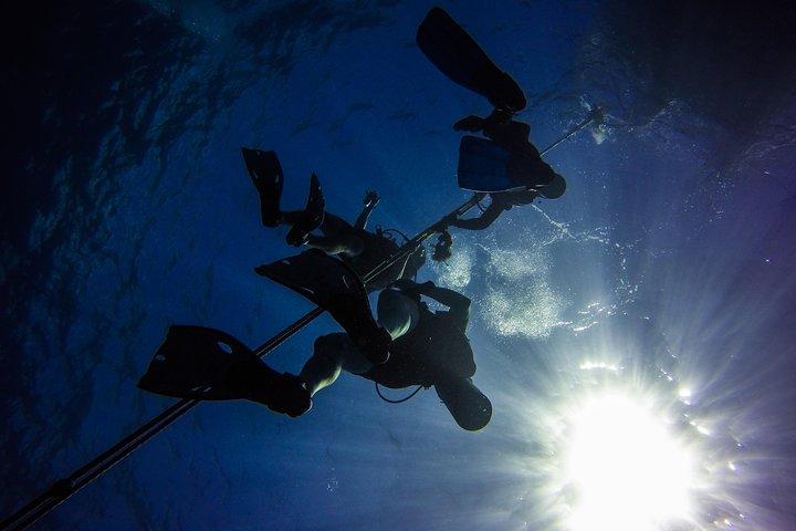 Excursión de día completo de buceo en Isla Catalina desde Bávaro, ,