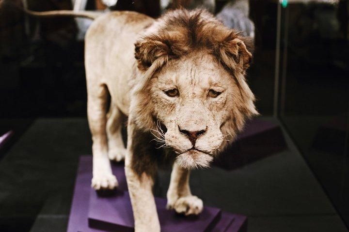 Smithsonian Museum of Natural History Private Guided Tour, Washington DC, ESTADOS UNIDOS