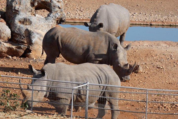 4 Day Etosha Safari Private Guided Tour Namibia, Swakopmund, NAMIBIA
