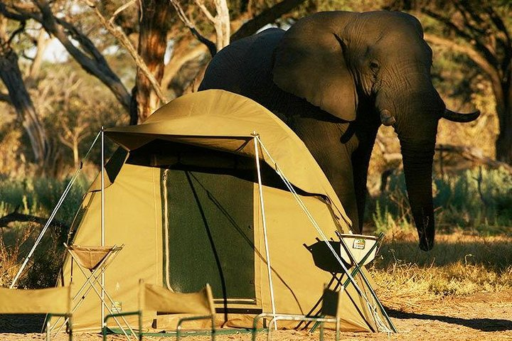 Chobe Camping 2day 1night, ,