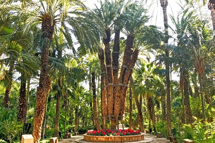 Elche Private Walking Tour, Alicante, ESPAÑA