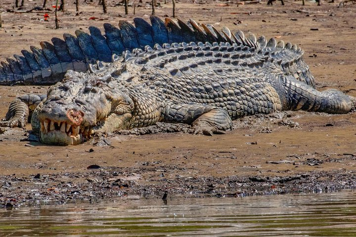 Solar Whisper Daintree River Crocodile and Wildlife Cruise, Port Douglas, AUSTRALIA