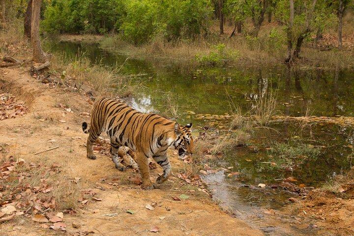 6 Day Private Tour of Taj with Glimpse of Tiger & Culture of Rajasthan, Nueva Delhi, INDIA