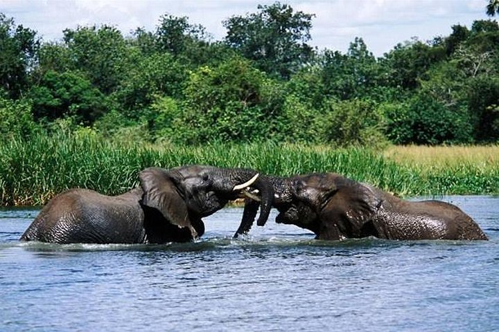 3-Day Trip To Murchison Falls Uganda, Kampala, UGANDA