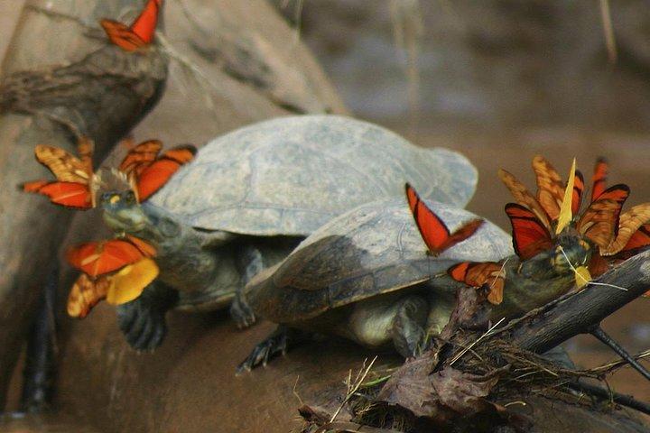 3-day Tambopata Ecolodge Rainforest Experience Tour, Puerto Maldonado, PERU
