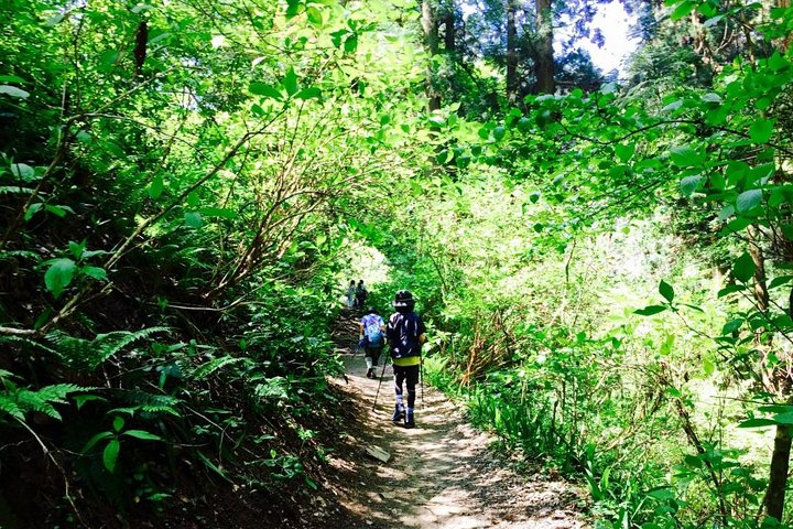 Tour del Monte Takao para hispanohablantes, Tokyo, JAPON