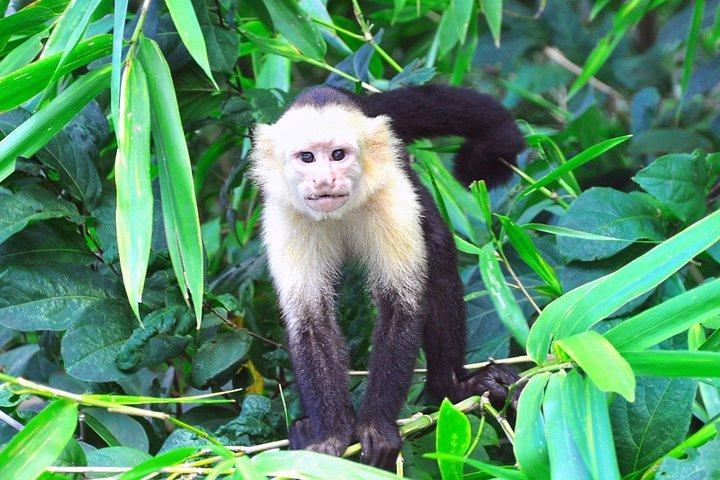 Parque Nacional Palo Verde, Liberia, COSTA RICA