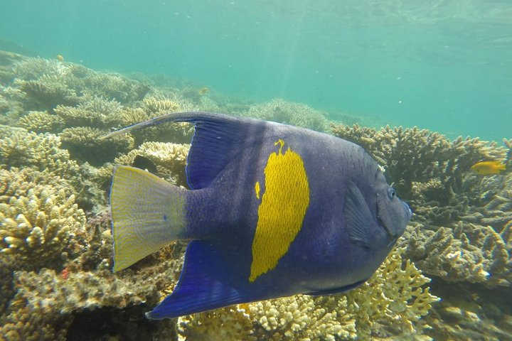 Snorkeling Trip to Utopia Island in Safaga from Luxor, Guiza, EGIPTO