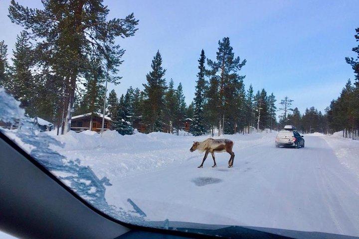 Winter Fairy Tale 6 Day tour, Helsinki to Lapland and Back, Helsinki, FINLANDIA