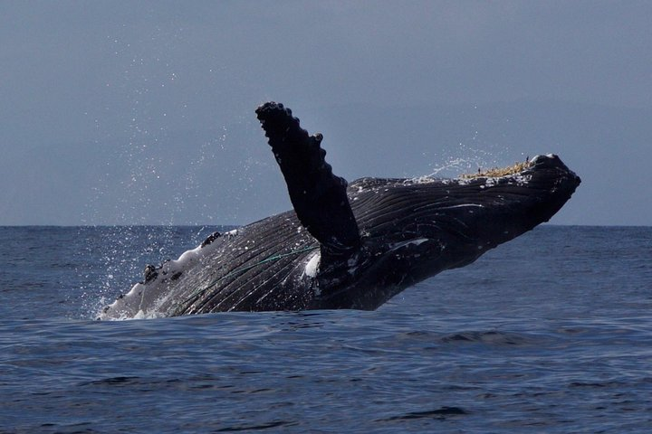 Ultimate Whale & Dolphin Watching Experience with Captain Nick in Newport Beach, Newport Beach, CA, ESTADOS UNIDOS