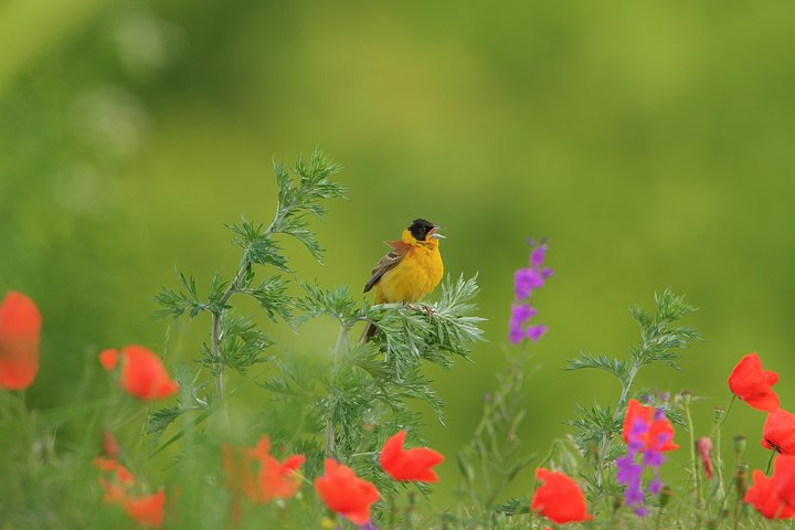 Two-day Birding Trip: The Eastern Rhodopes & Sakar, Varna, BULGARIA