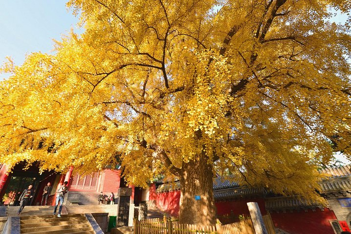Luoyang Private Tour to Shaolin Temple and Sanhuang Village Scenic with Cable Car Ride, Luoyang, CHINA