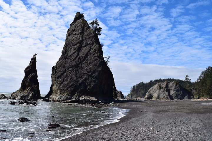 Hoh Rain Forest and Rialto Beach Guided Tour in Olympic National Park, Port Angeles, WA, ESTADOS UNIDOS