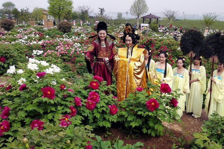 Luoyang Private Tour to Longmen Grottoes and Peony Blossom Sightseeing, Luoyang, CHINA