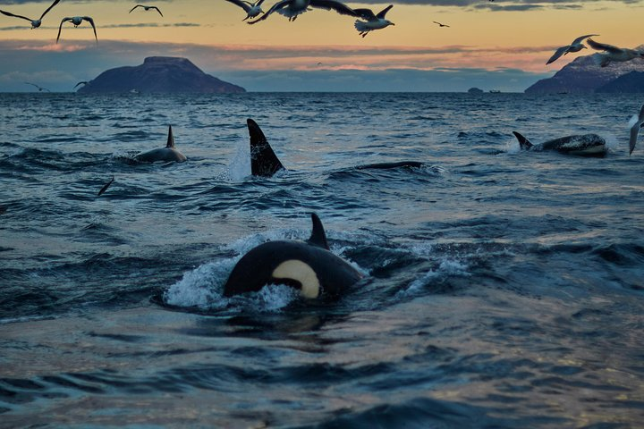 Whale watching in Magic Skjervoy!, Tromso, NORUEGA