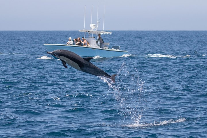 Ultimate Private Whale and Dolphin Watching Tour with Capt. Nick, Newport Beach, CA, ESTADOS UNIDOS