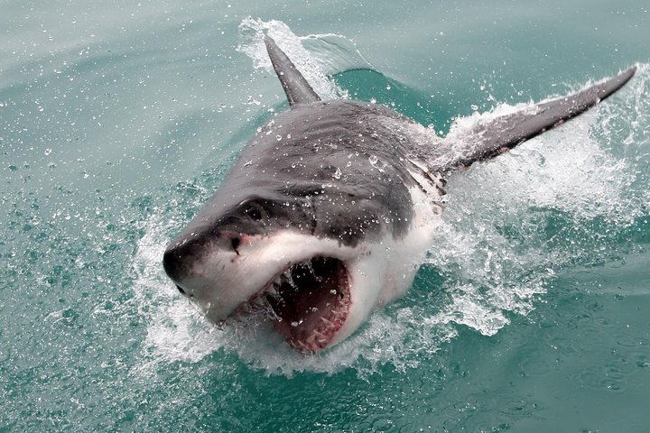 Shark Cage Diving and Viewing from Cape Town, Cape Town, South Africa